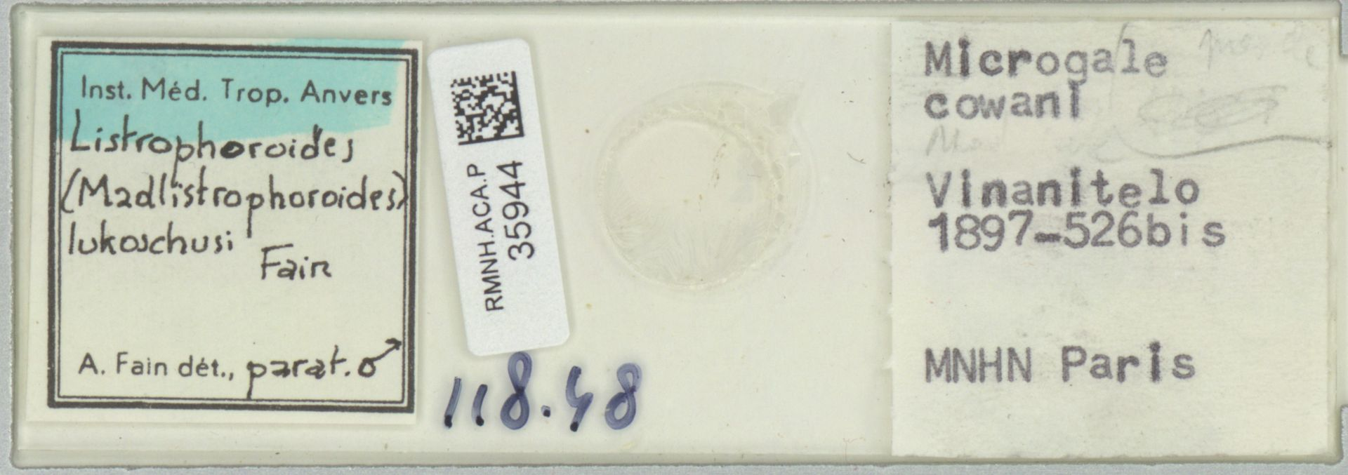 RMNH.ACA.P.35944 | Listrophoroides (Madlistrophoroides) lukoschusi Fain