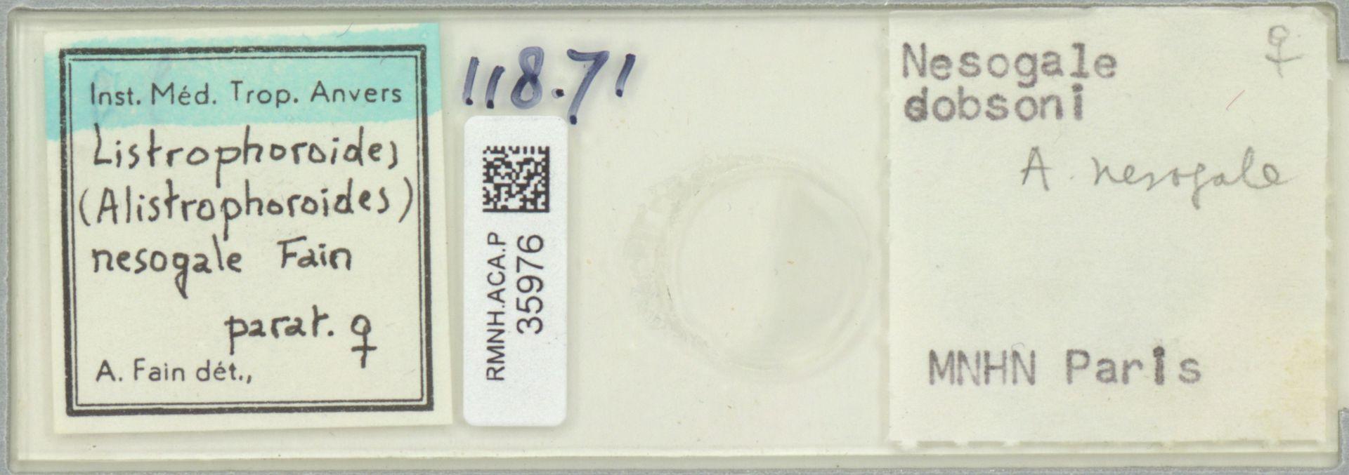 RMNH.ACA.P.35976   Listrophoroides (Alistrophoroides) nesogale Fain