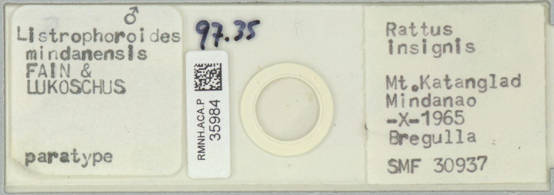 RMNH.ACA.P.35984 | Listrophoroides mindanensis Fain & Lukoschus
