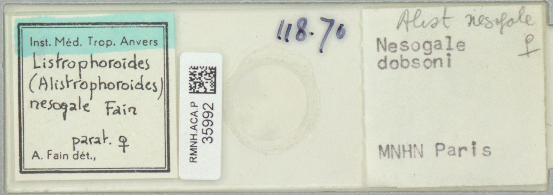 RMNH.ACA.P.35992 | Listrophoroides (Alistrophoroides) nesogale Fain