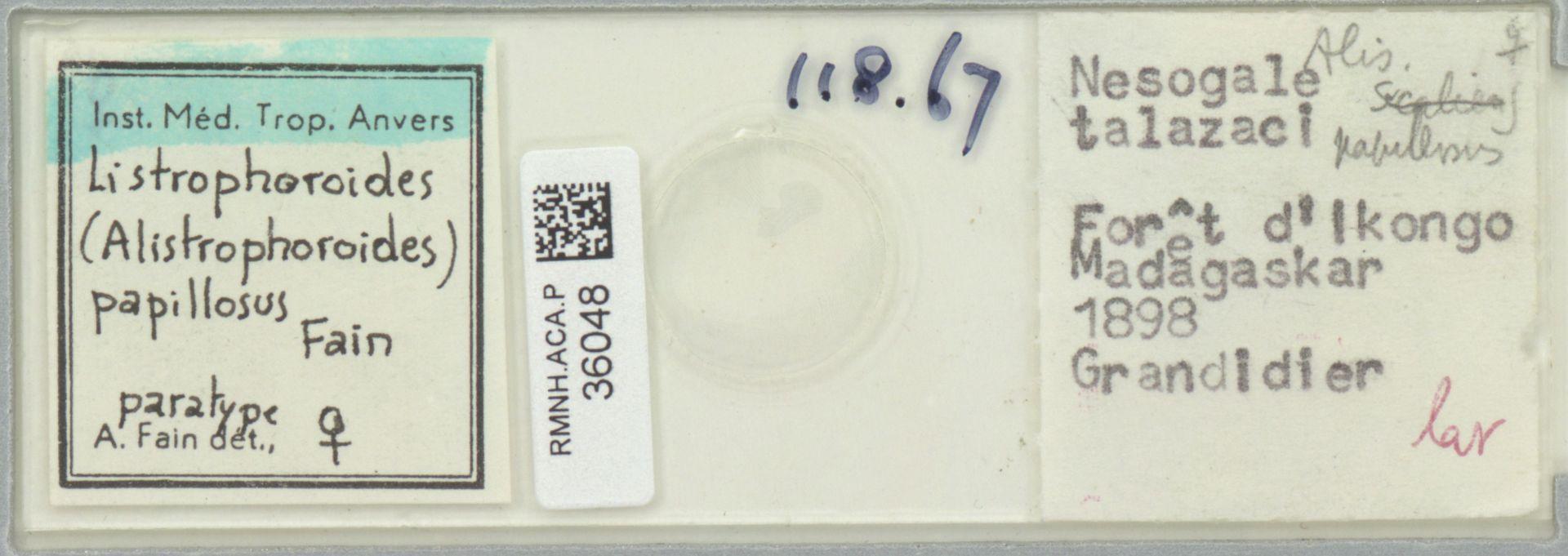 RMNH.ACA.P.36048 | Listrophoroides (Alistrophoroides) papillosus Fain