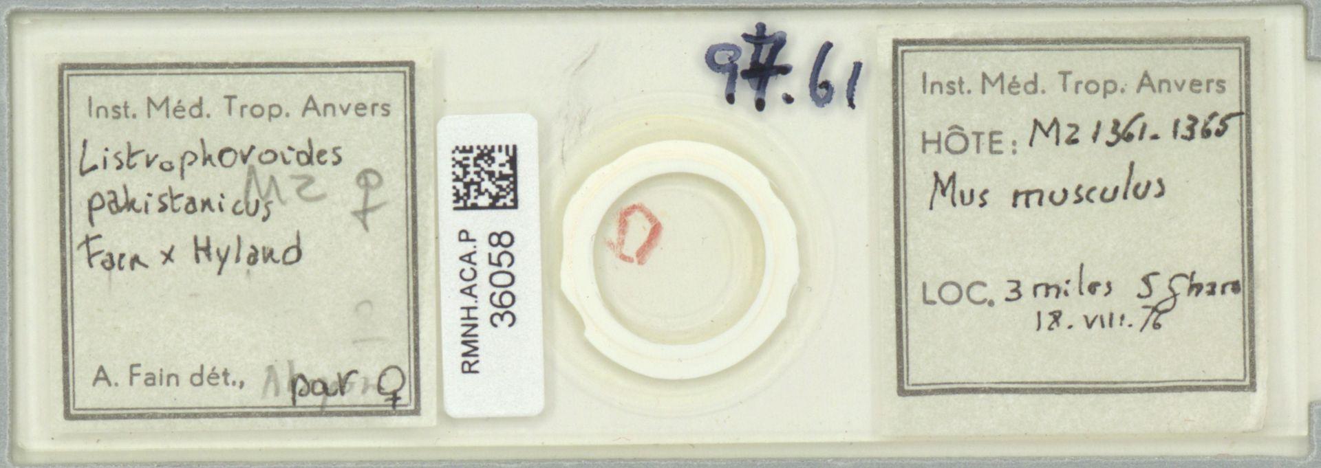 RMNH.ACA.P.36058 | Listrophoroides pakistanicus Fain & Hyland