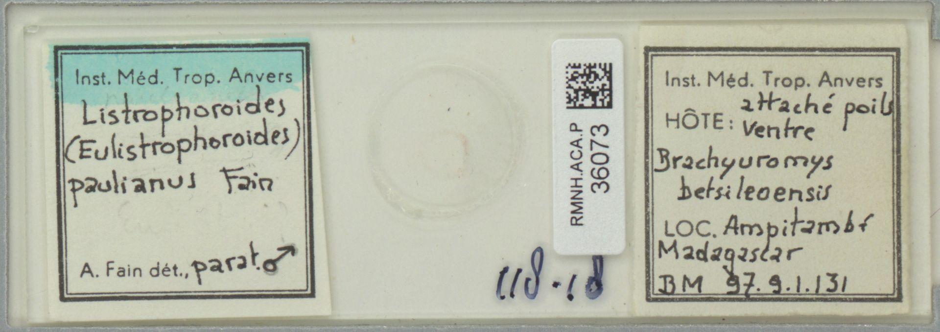 RMNH.ACA.P.36073 | Listrophoroides (Eulistrophoroides) paulianus Fain