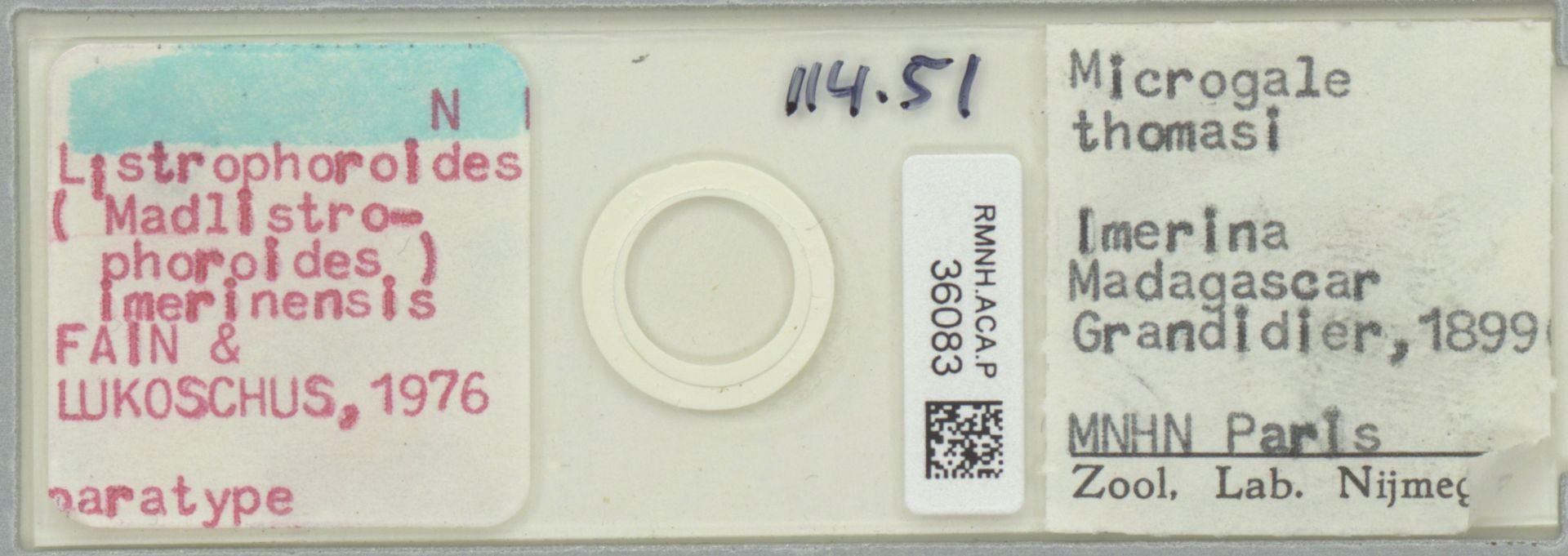RMNH.ACA.P.36083 | Listrophoroides (Madlistrophoroides) imerinensis Fain & Lukoschus, 1976