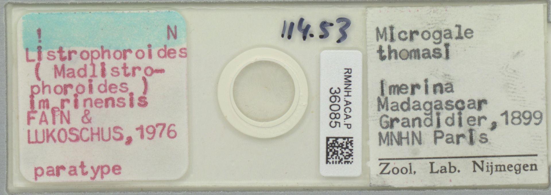 RMNH.ACA.P.36085 | Listrophoroides (Madlistrophoroides) imerinensis Fain & Lukoschus 1976