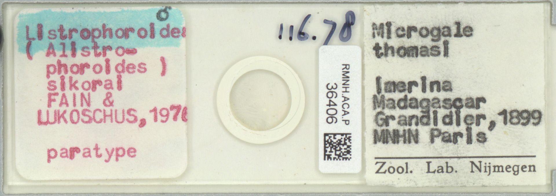 RMNH.ACA.P.36406   Listrophoroides (Alistrophoroides) sikorai Fain & Lukoschus 197@