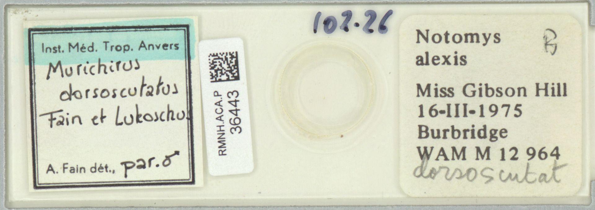RMNH.ACA.P.36443 | Murichirus dorsoscutatus Fain & Lukoschus