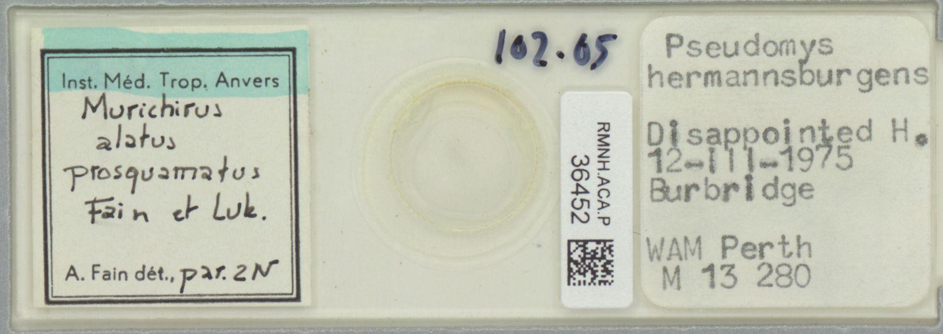 RMNH.ACA.P.36452   Murichirus alatus prosquamatus Fain & Luk.