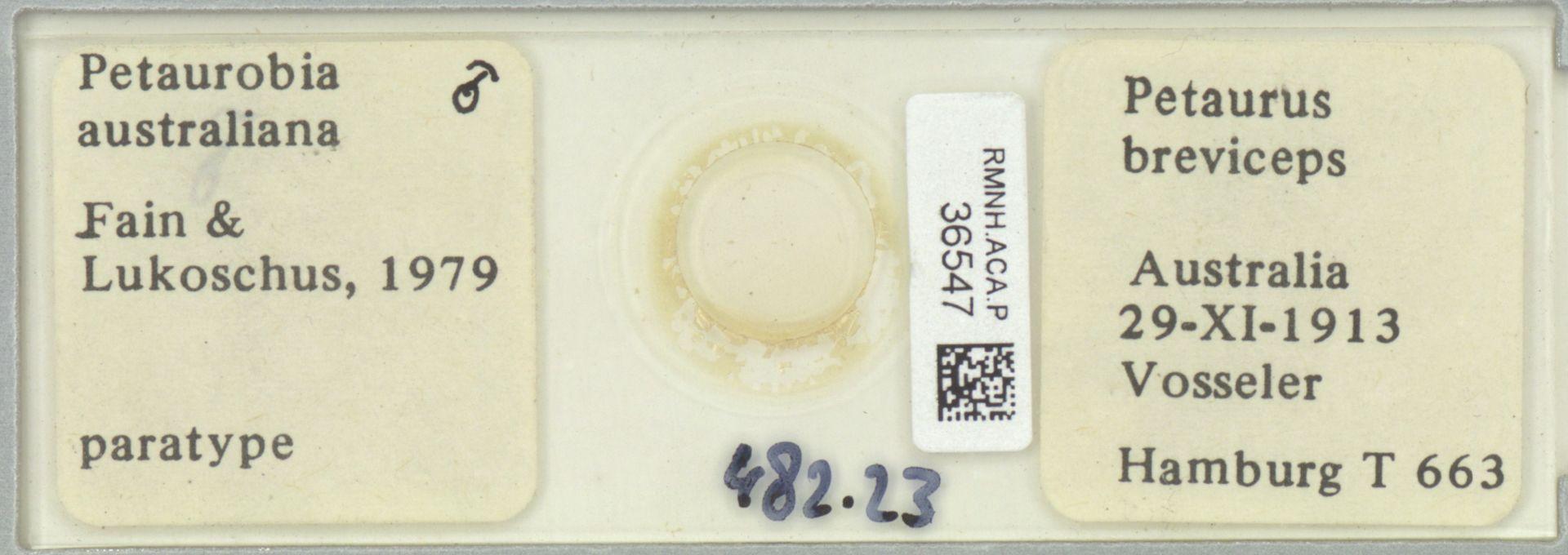 RMNH.ACA.P.36547 | Petaurobia australiana Fain & Lukoschus, 1979