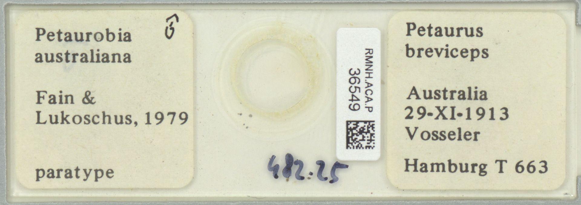RMNH.ACA.P.36549   Petaurobia australiana Fain & Lukoschus, 1979