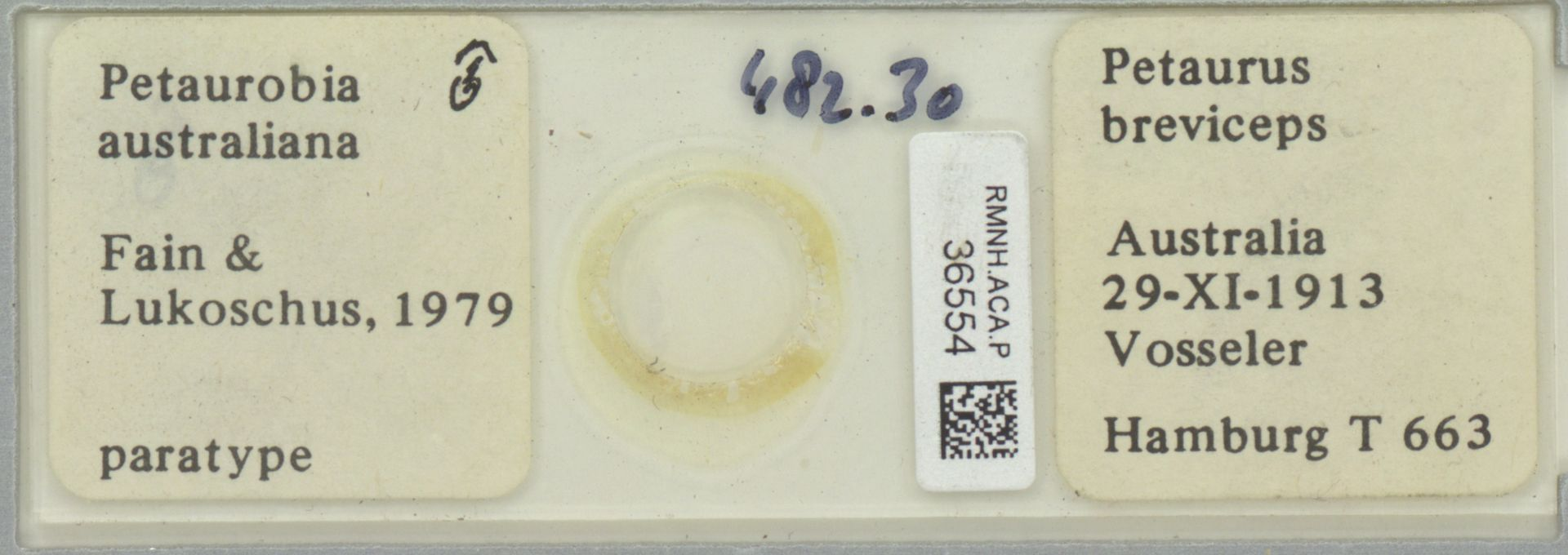 RMNH.ACA.P.36554 | Petaurobia australiana Fain & Lukoschus, 1979