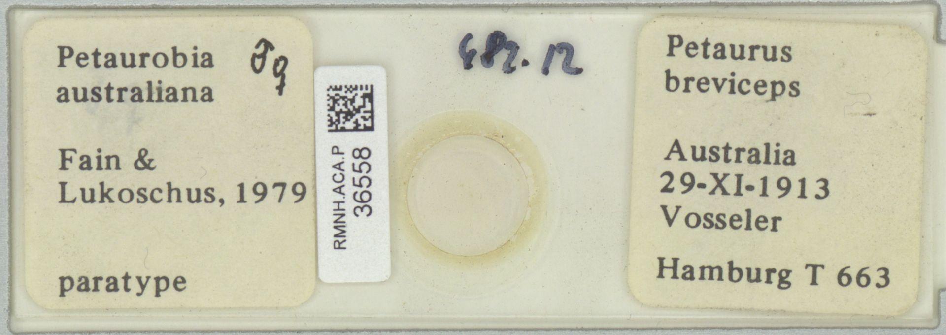 RMNH.ACA.P.36558   Petaurobia australiana Fain & Lukoschus, 1979