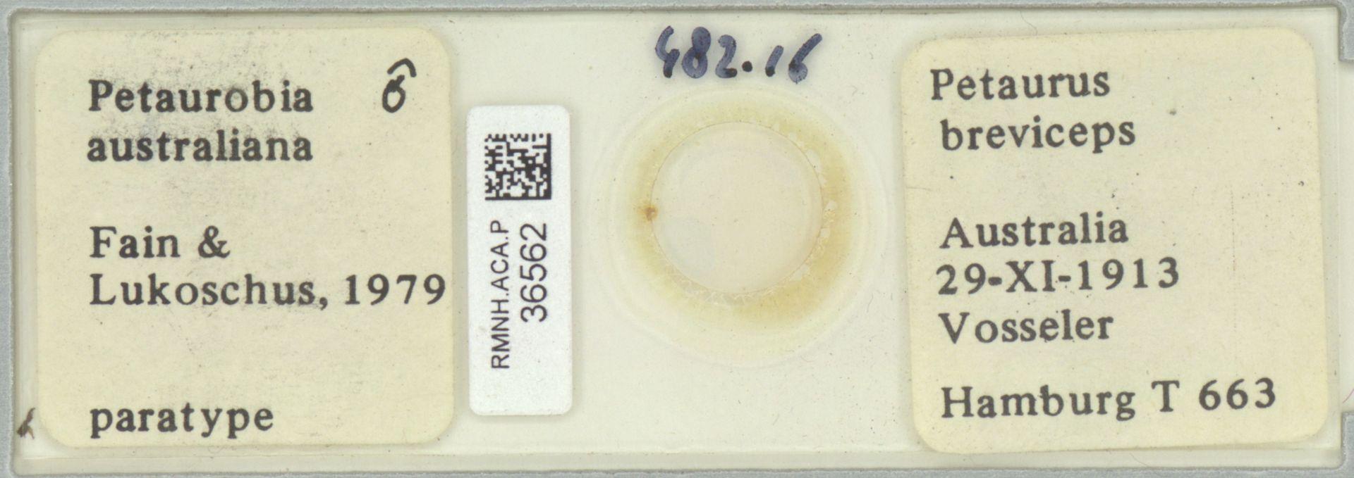 RMNH.ACA.P.36562 | Petaurobia australiana Fain & Lukoschus, 1979