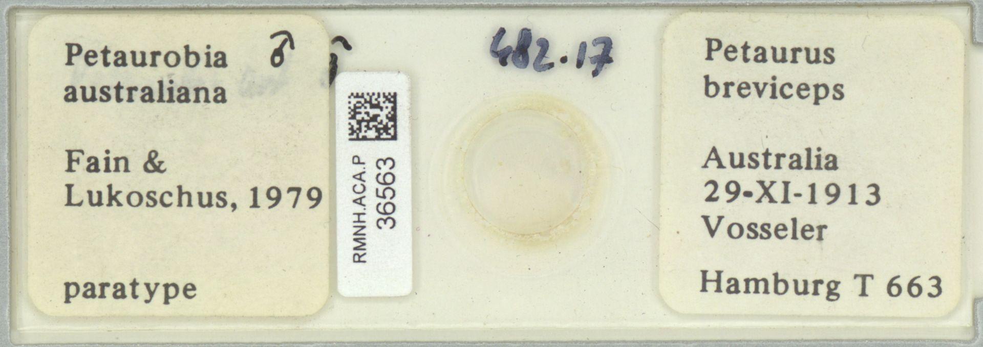 RMNH.ACA.P.36563 | Petaurobia australiana Fain & Lukoschus, 1979