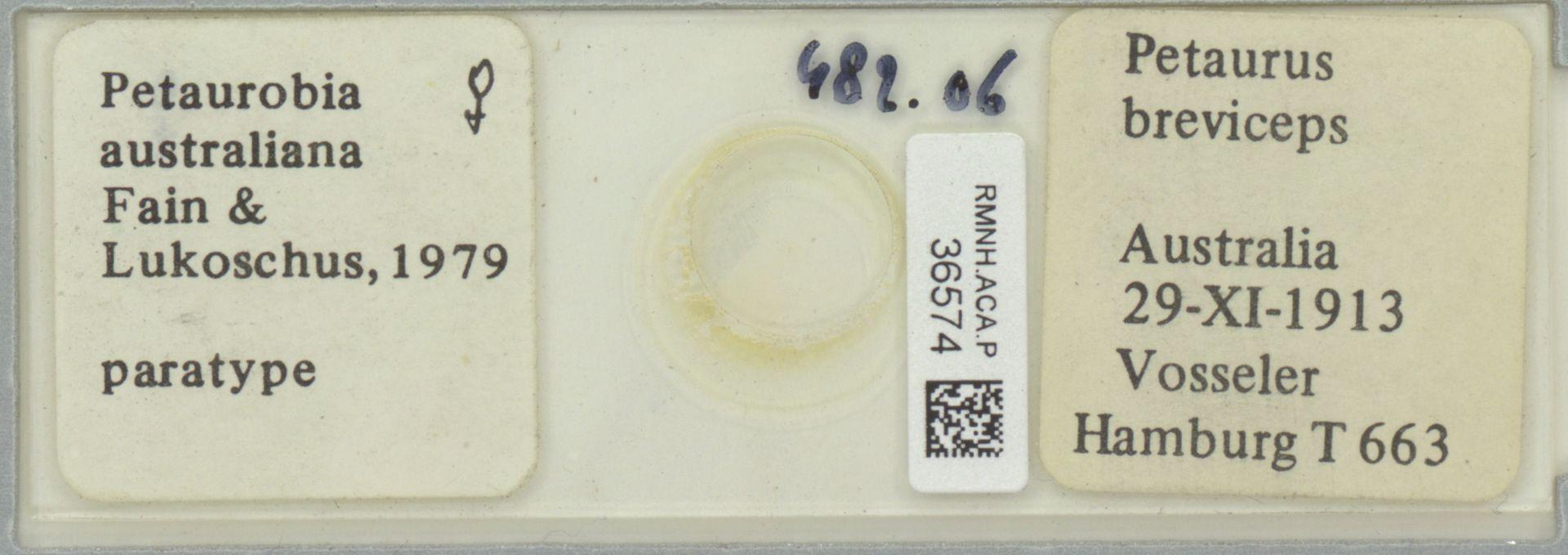 RMNH.ACA.P.36574 | Petaurobia australiana Fain & Lukoschus, 1979