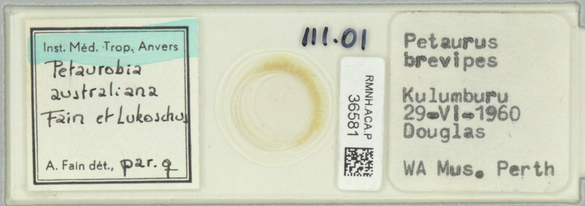 RMNH.ACA.P.36581 | Petaurobia australiana Fain et Lukoschus