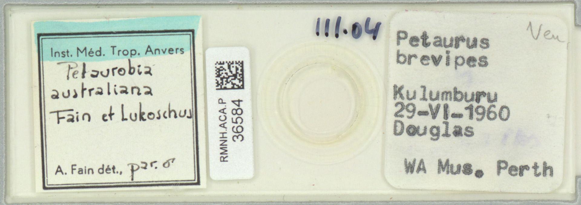 RMNH.ACA.P.36584   Petaurobia australiana Fain et Lukoschus