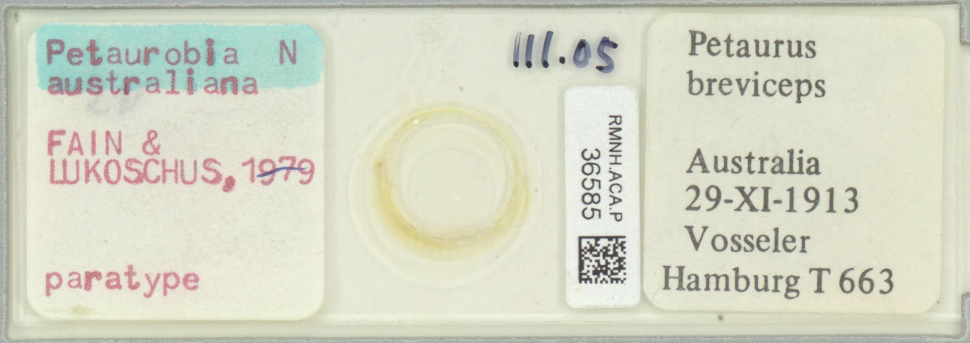 RMNH.ACA.P.36585 | Petaurobia australiana Fain & Lukoschus