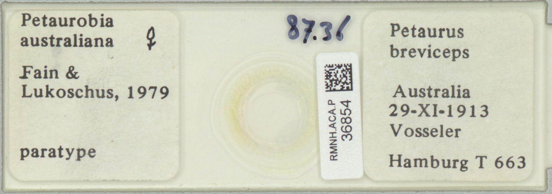 RMNH.ACA.P.36854 | Petaurobia australiana Fain & Lukoschus, 1979