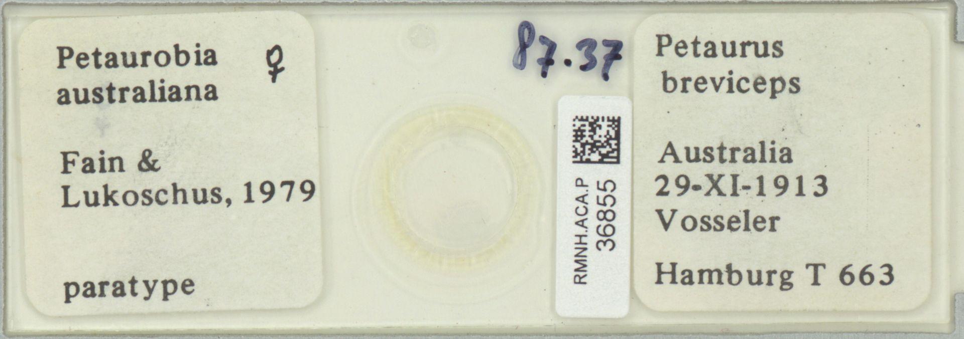 RMNH.ACA.P.36855   Petaurobia australiana Fain & Lukoschus 1979