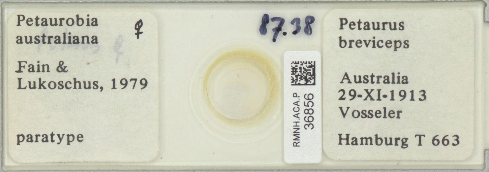 RMNH.ACA.P.36856   Petaurobia australiana Fain & Lukoschus 1979