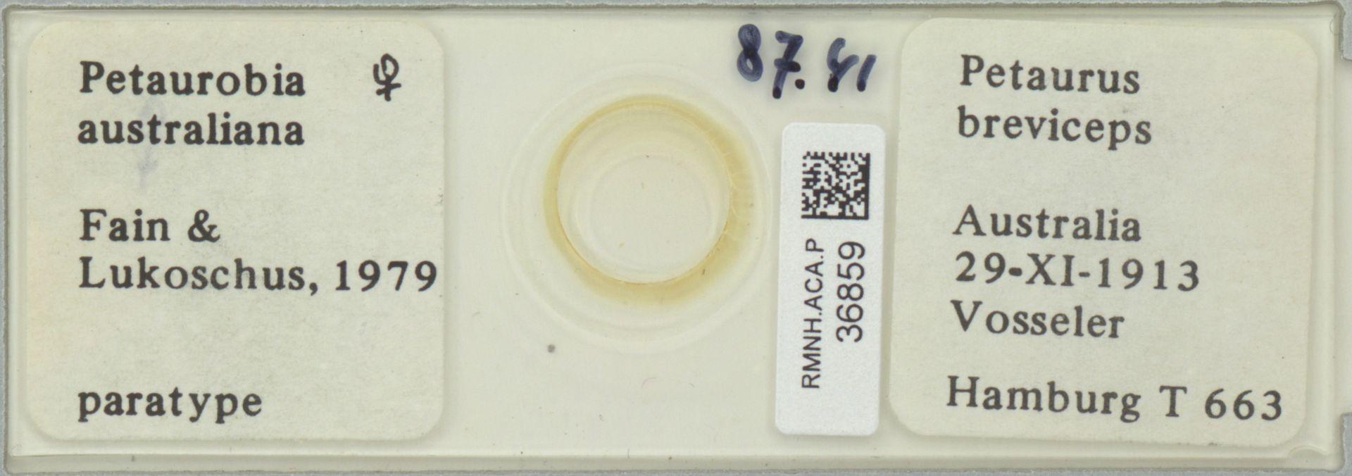 RMNH.ACA.P.36859 | Petaurobia australiana Fain & Lukoschus, 1979