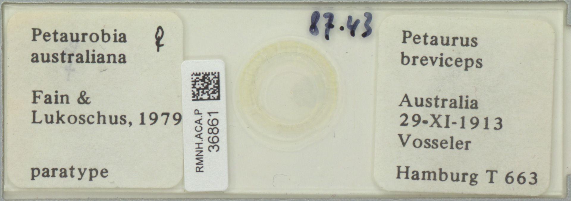 RMNH.ACA.P.36861   Petaurobia australiana Fain & Lukoschus, 1979