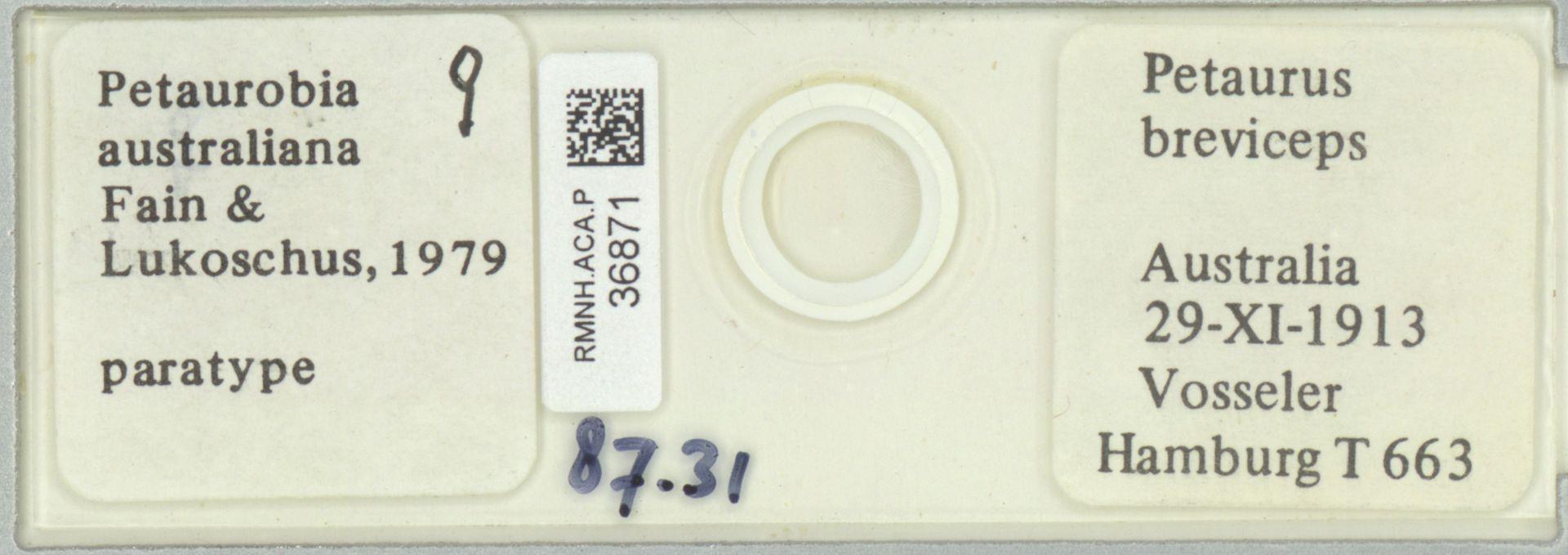 RMNH.ACA.P.36871   Petaurobia australiana Fain & Lukoschus, 1979