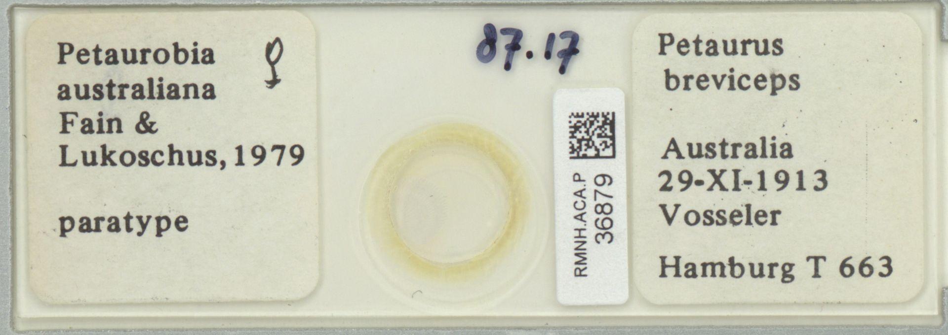 RMNH.ACA.P.36879   Petaurobia australiana Fain & Lukoschus, 1979