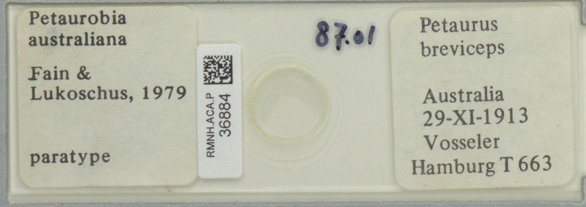 RMNH.ACA.P.36884 | Petaurobia australiana Fain & Lukoschus, 1979