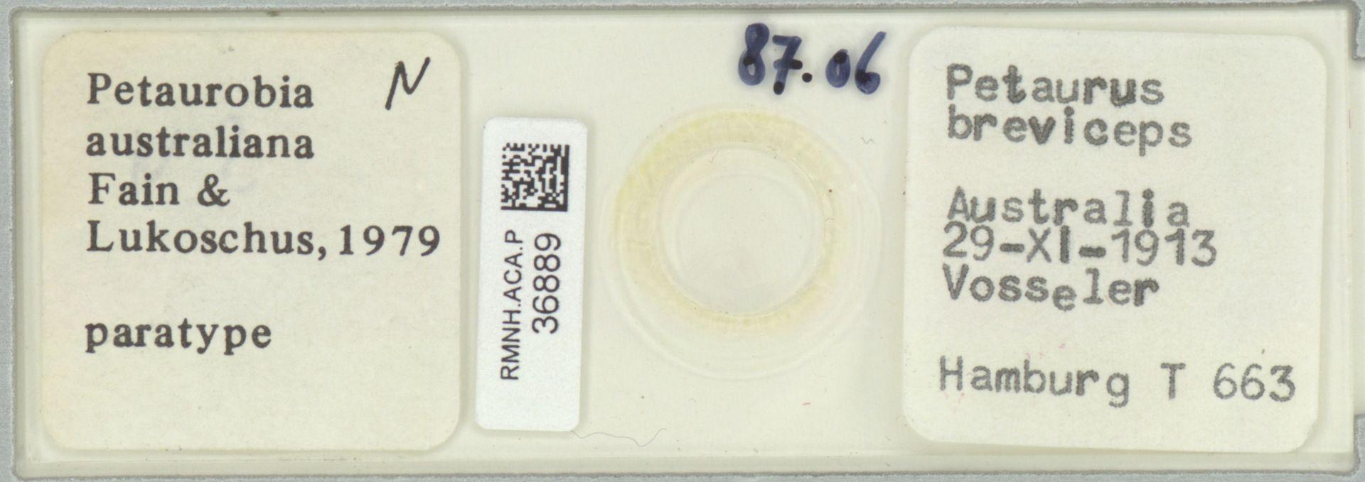 RMNH.ACA.P.36889   Petaurobia australiana Fain & Lukoschus, 1979