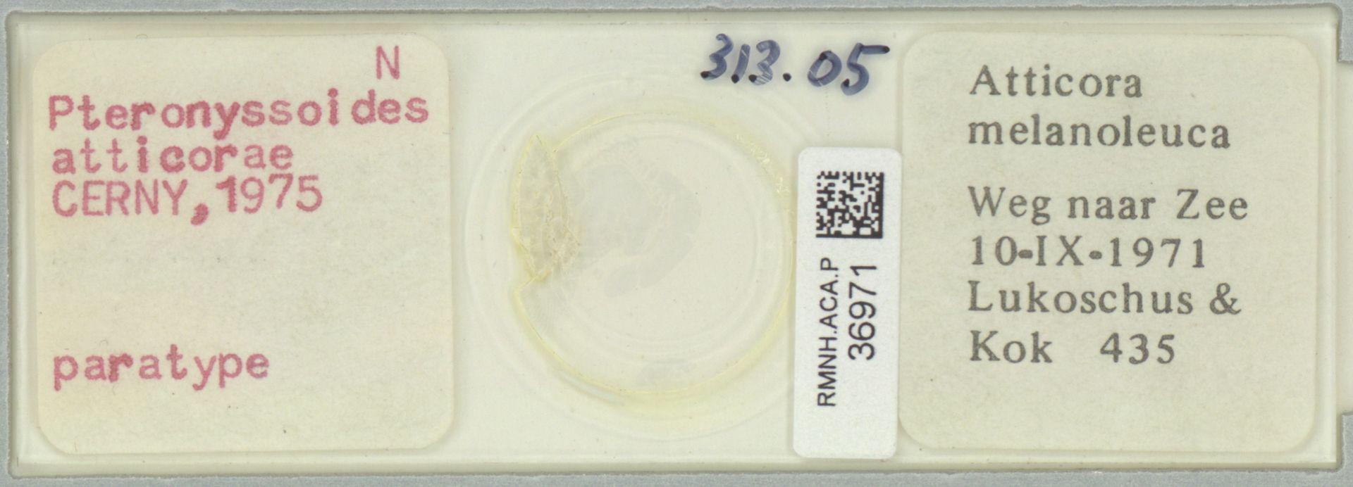 RMNH.ACA.P.36971 | Pteronyssoides atticorae Cerny, 1975