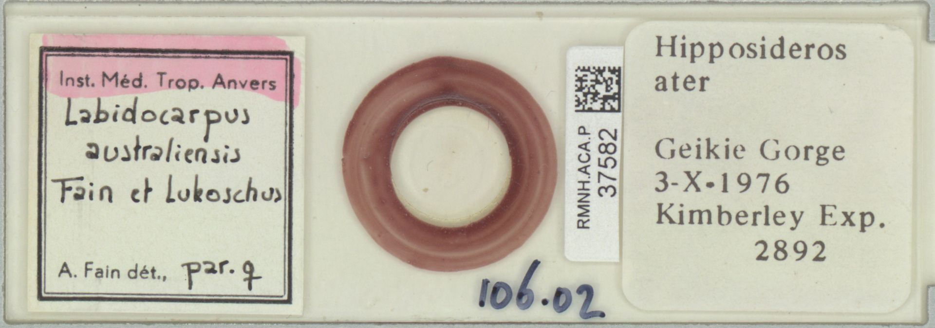 RMNH.ACA.P.37582 | Labidocarpus australiensis Fain & Lukoschus
