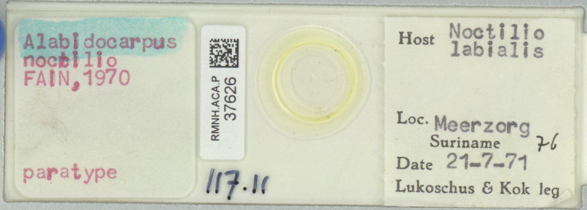 RMNH.ACA.P.37626 | Alabidocarpus nocilio Fain, 1970