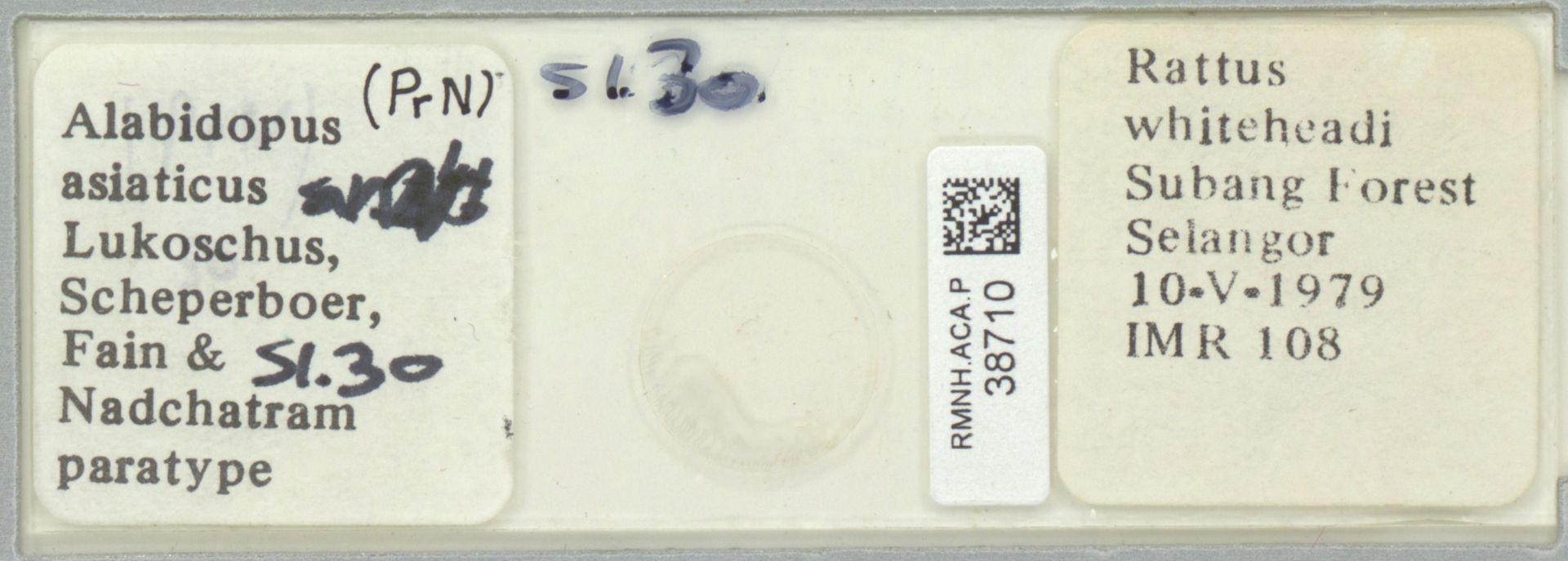 RMNH.ACA.P.38710   Alabidopus asiaticus Lukoschus, Scheperboer, Fain & Nadchatram