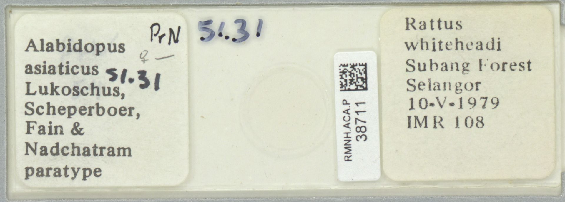 RMNH.ACA.P.38711   Alabidopus asiaticus Lukoschus, Scheperboer, Fain & Nadchatram
