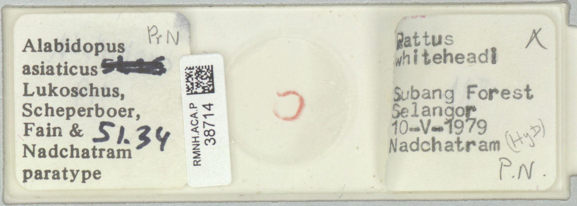 RMNH.ACA.P.38714 | Alabidopus asiaticus Lukoschus, Scheperboer, Fain & Nadchatram