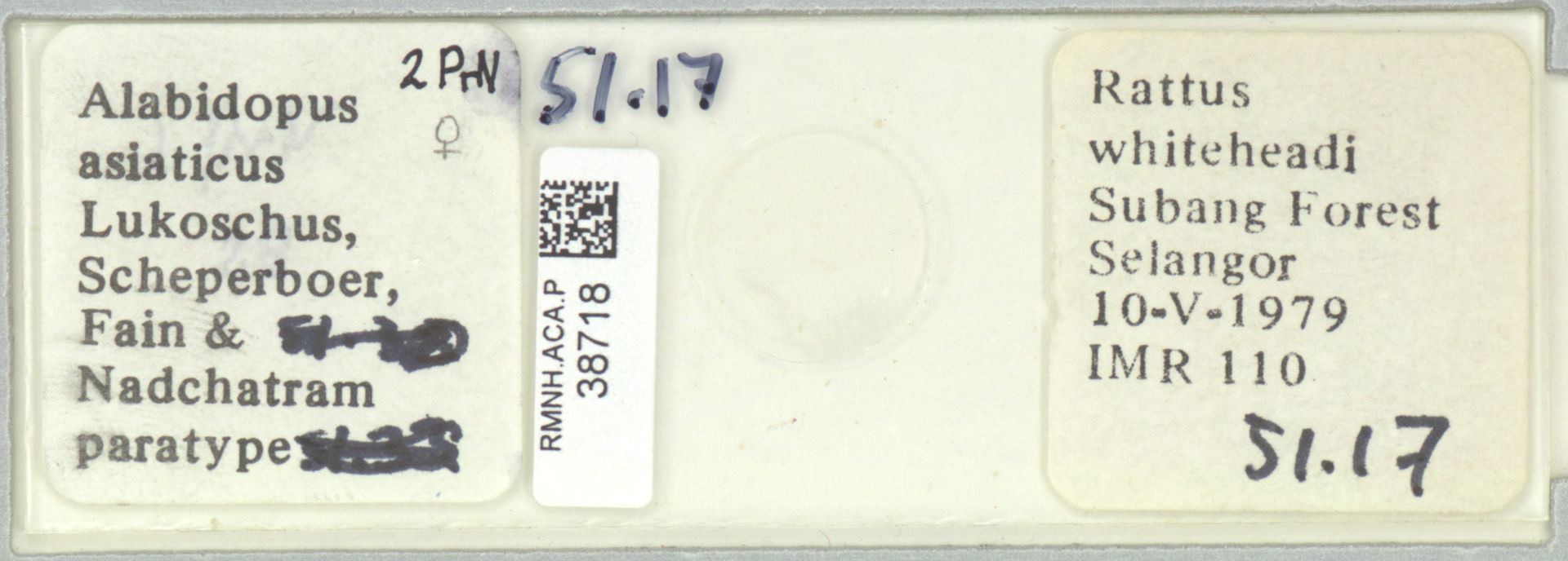 RMNH.ACA.P.38718   Alabidopus asiaticus Lukoschus, Scheperboer, Fain & Nadchatram
