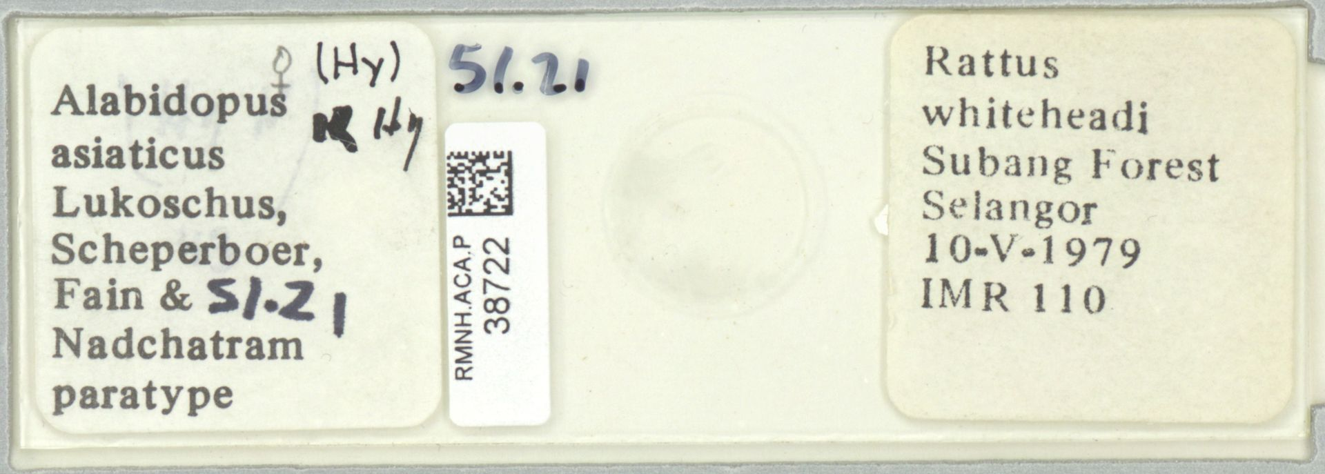 RMNH.ACA.P.38722 | Alabidopus asiaticus Lukoschus, Scheperboer, Fain & Nadchatram