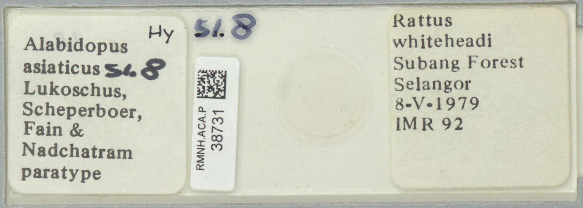 RMNH.ACA.P.38731 | Alabidopus asiaticus Lukoschus, Scheperboer, Fain & Nadchatram
