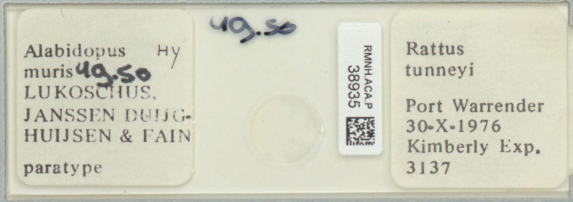 RMNH.ACA.P.38935 | Alabidopus muris Lukoschus,Janssen, Duijghuijsen & Fain