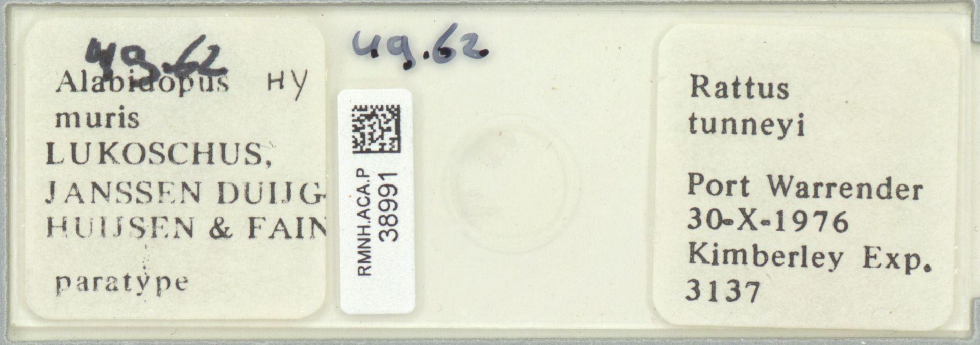 RMNH.ACA.P.38991 | Alabidopus muris Lukoschus, Janssen Duijghuijsen, Fain