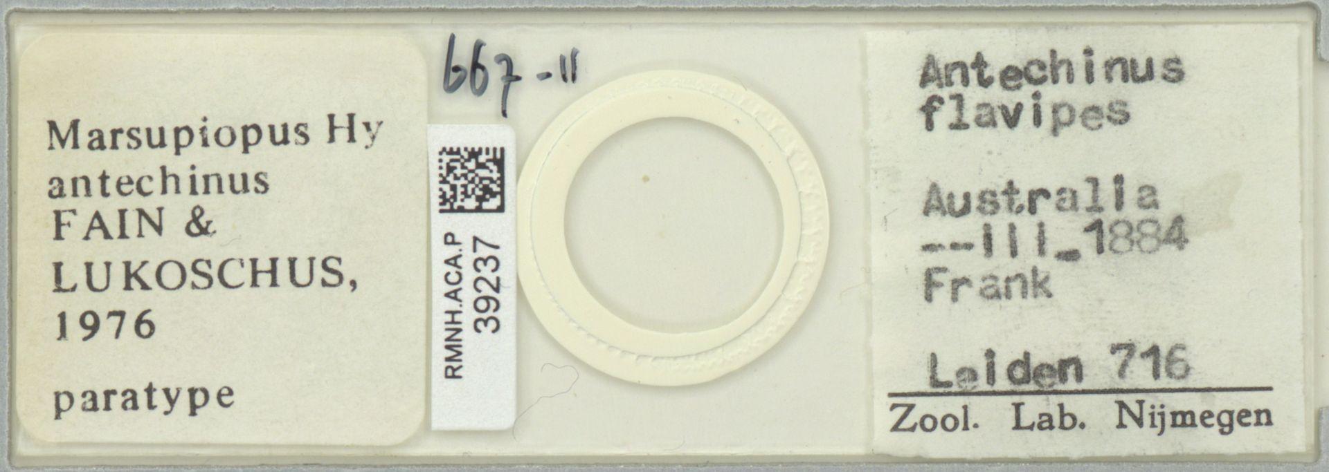 RMNH.ACA.P.39237 | Marsupiopus antechnius Fain & Lukoschus, 1976