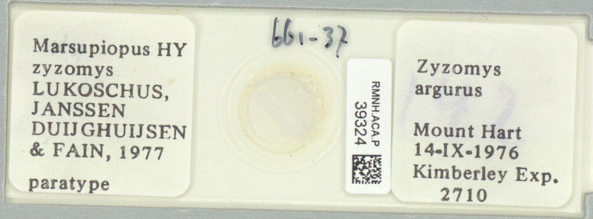 RMNH.ACA.P.39324 | Marsupiopus zyzomys Lukoschus,Janssen, Duijghuijsen & Fain