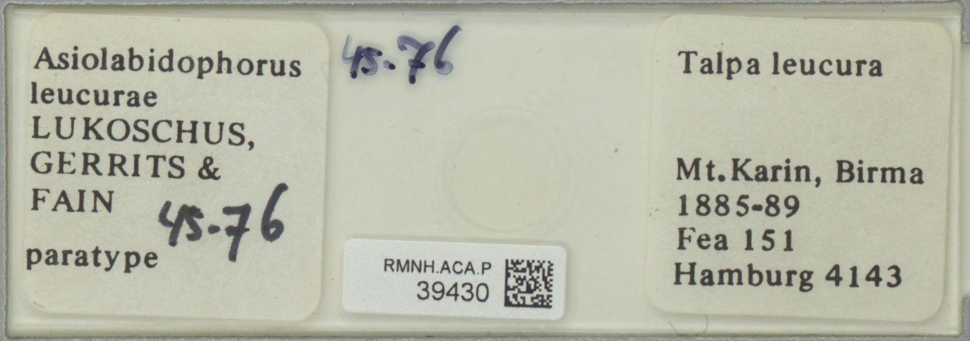 RMNH.ACA.P.39430 | Asiolabidophorus leucurae Lukoschus, Gerrits & Fain