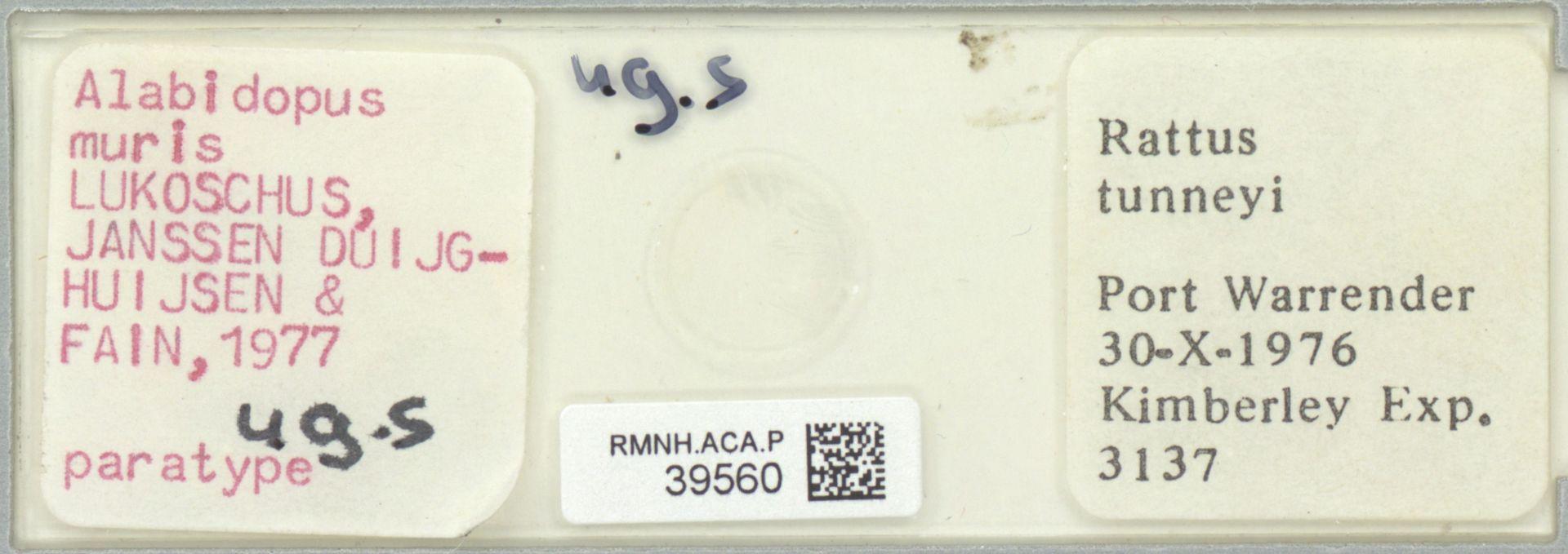 RMNH.ACA.P.39560 | Alabidopus muris Lukoschus, Janssen Duijghuijsen & Fain, 1977