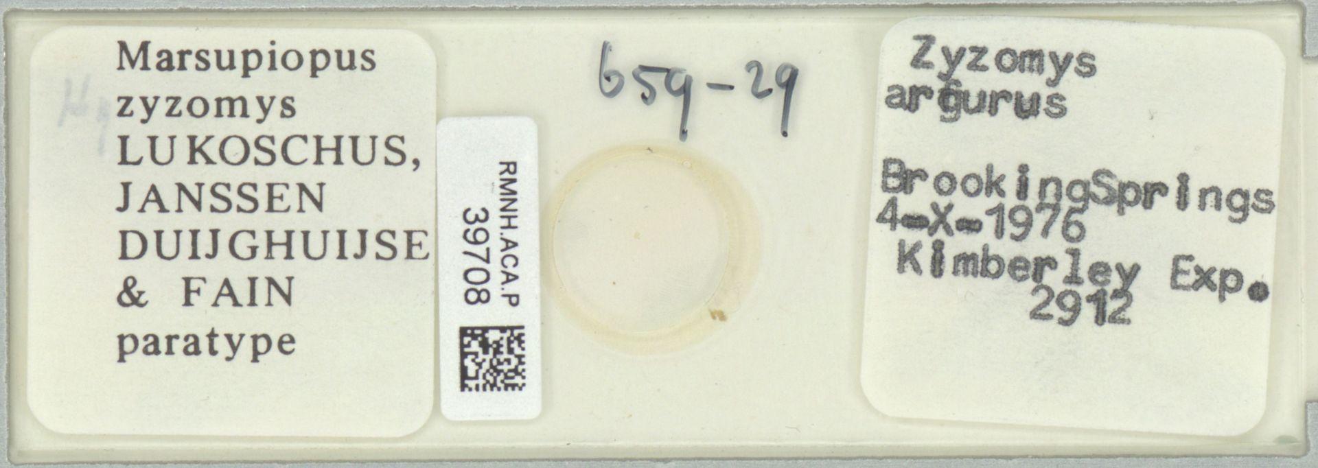 RMNH.ACA.P.39708 | Marsupiopus zysomys Lukoschus, Janssen Duijghuijse & Fain