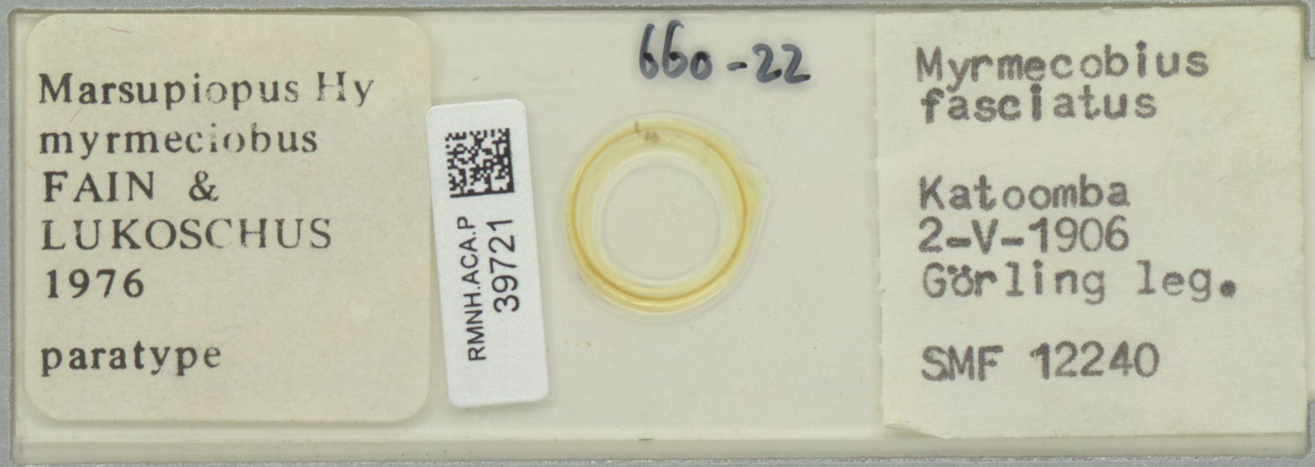 RMNH.ACA.P.39721 | Marsupiopus myrmeciobus FAIN & LUKOSCHUS 1976