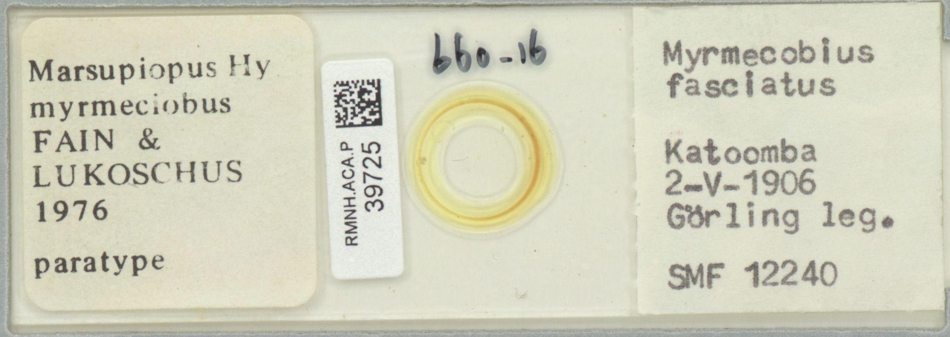 RMNH.ACA.P.39725   Marsupiopus (Hy) myrmeciobus Fain & Lukoschus 1976