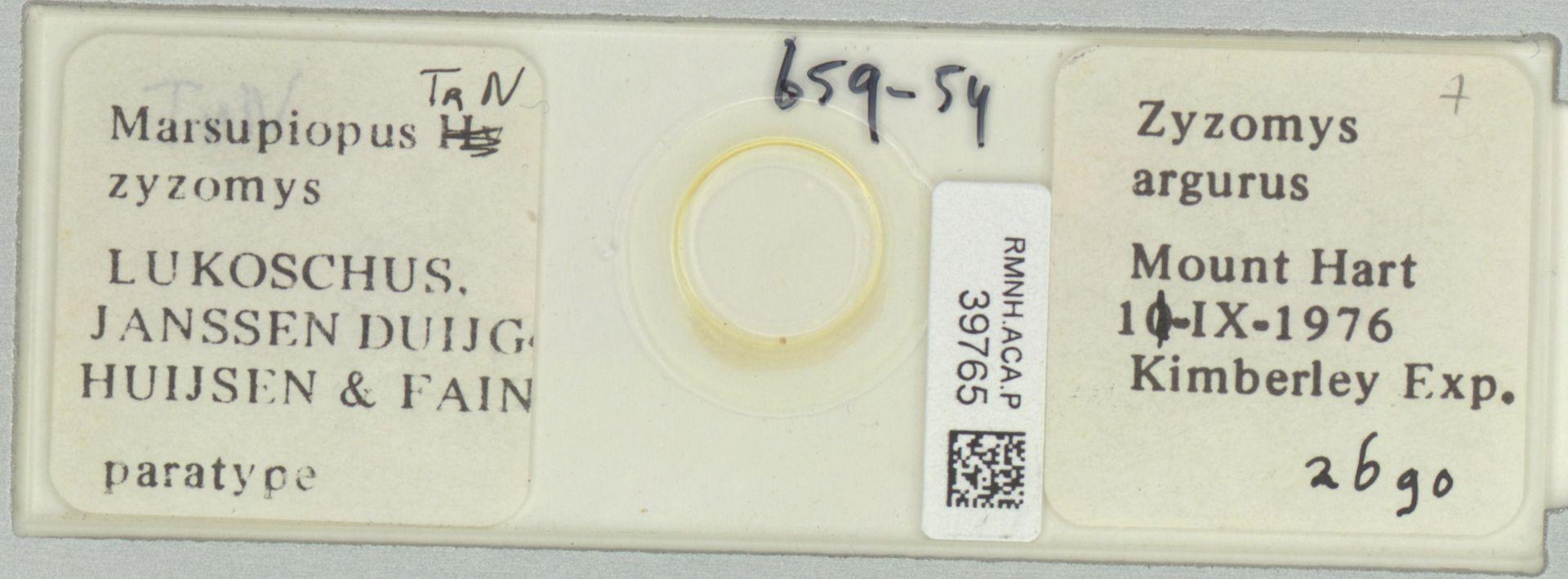 RMNH.ACA.P.39765   Marsupiopus zyzomys Lukoschus, Janssen Duijghuijsen & Fain